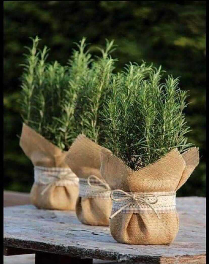 Succulent plants in hessian bags